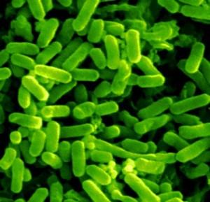 Infezione urinaria da escherichia coli: che cosa è e come si cura?
