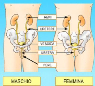 Uretrite: eziologia, diagnosi e trattamento - | Prof. Laganà Urologo - Andrologo Roma