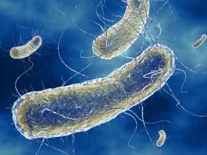Esiste l'antibiotico per l'escherichia coli?