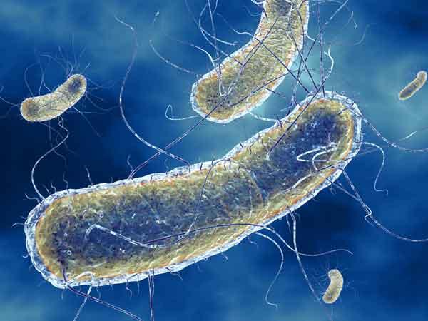 E Coli (Escherichia Coli): cura, sintomi e cause - GreenStyle