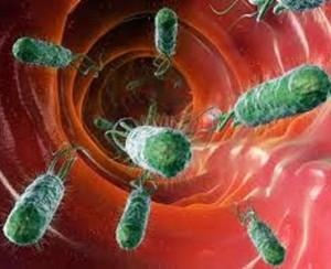 Escherichia coli responsabile della cistite
